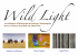 WILD LIGHT EXHIBITION
