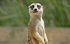 Meet The Meerkats at Sanders Gardenworld FREE Family Fun Day