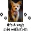It's a dogs life with Ki-Ki at Pawgeous Pooches – What a buzz kill!