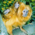 Dodolings - Tamarin Monkeys