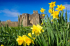 Visit a Castle in Wales for FREE on St David's Day!