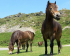 Exmoor Pony Centre Easter Open Day