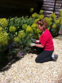 Ten Week Gardening Course