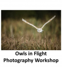 Owls in Flight Photography Workshop at the British Wildlife Centre with Adriaan Van Heerden @ avhphotography