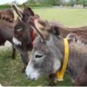 Sidmouth and The Donkey Sanctuary