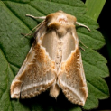 Moths and Grasshoppers at The Earth Trust