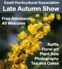 Ewell Horticultural Assoc. – LATE AUTUMN SHOW #Loveyourgarden
