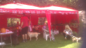 Drinkstone Village Fete, Fun Dog Show & Car Boot Sale