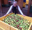 Donate your Apples for Juicing!