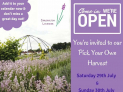 Feast on the colour and aroma of Lavender at Harvest Weekend with Carshalton Lavender @lavenderSM5