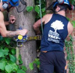 Tree services in Hitchin - The Blue Tree Company