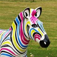 Zebra Zooooom