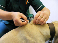 £10 Microchipping offer at Clent Hills Vets