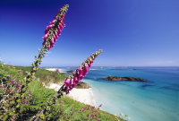 20% TUESDAY 19TH MAY - HERM ISLAND DISCOUNTS