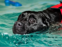 TWO RECREATIONAL SWIMS FOR JUST £20 - FAB FUN FOR YOUR FOUR LEGGED FRIEND!