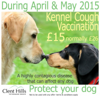 Kennel Cough Vaccinations at Clent Hills Vets