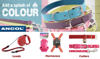 May Madness Promotion -  10% off all Ancol leads, collars & harnesses