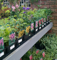 2 FOR £10 PERENNIALS