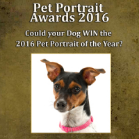 WIN £1000 & a FREE pet portrait session!