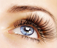 15% OFF Hollywood Lashes