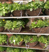 2 FOR £15 HANGING BASKETS