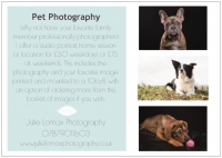 Pet Photography from only £50 with Julie Lomax Photography