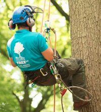 Tree Surgeons in Hitchin