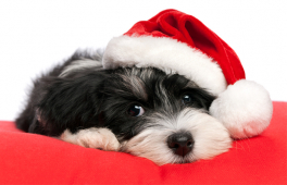 A dog is for life, not just for Christmas