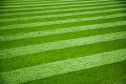 Tackling Lawn Pests & Problems