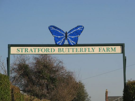 how to start a butterfly farm business
