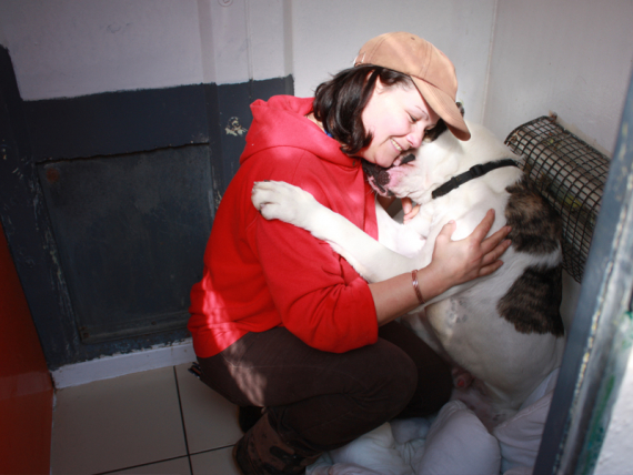 Best Dog Kennels In Bridgend
