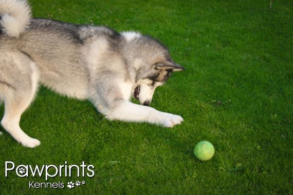 Best In Bury Dog Kennels