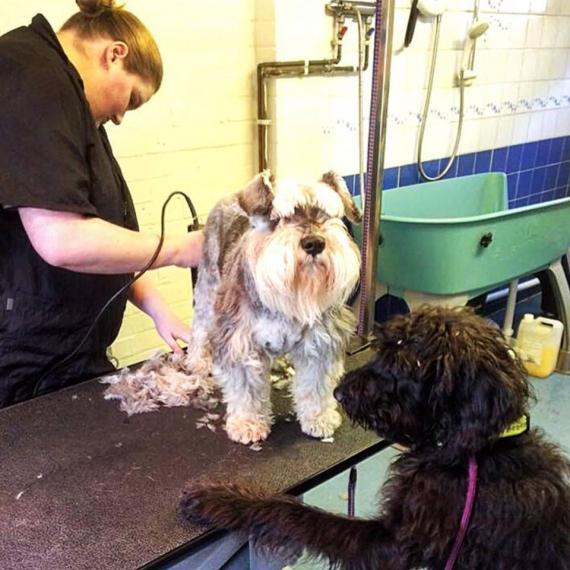Dog Training College Ipswich Reviews