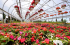 Who is the best Garden Centre in Eastbourne?