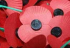Why do we wear Poppies for Remembrance Day?
