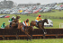 Dingley Racecouse Point to Point