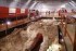 Welwyn Roman Baths: special anniversary afternoon on Sunday 24th May