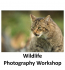 Wildlife Photography Workshop at the British Wildlife Centre with Adriaan Van Heerden @ avhphotography