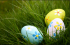 Eggciting Easter Egg Hunts in Harrogate