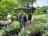 Plant Fair at Hodnet Hall near Shrewsbury