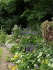 Lime Close open garden for NGS, Drayton