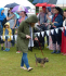 Armadillo Pets will be sponsoring the Fun Dog Show at Hale Carnival
