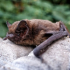 Bats of the Clumps