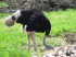 Don't be an ostrich. Debt problems resolved at Debt Release Direct.