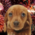 Keep your pets safe on Bonfire Night