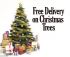 FREE LOCAL DELIVERY OF REAL CHRISTMAS TREES FROM HAMILTONS ST NEOTS
