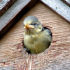 National Nest Box Week  14th - 21 February 2016