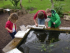 Hillier Gardens: Pond Dipping