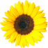 Sunflower Fete
