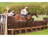 Dingley Races - (Point to Point)